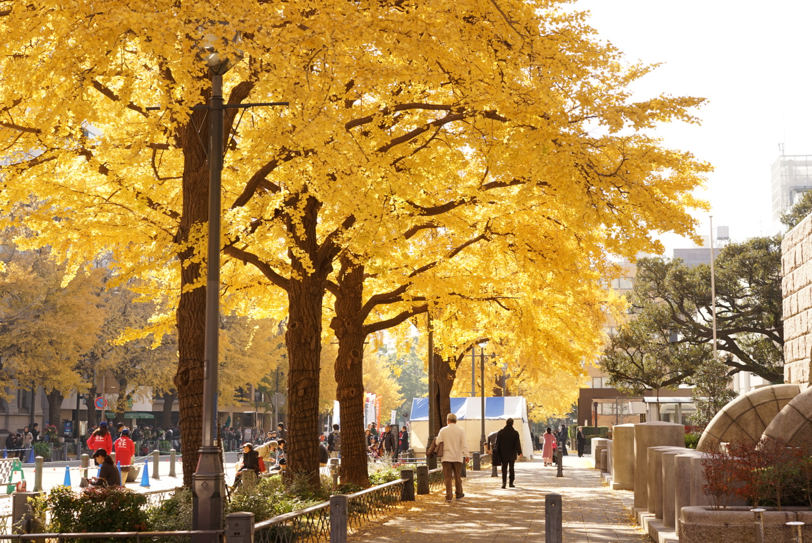 Gingko Tree Nihon Odori Yokohama2