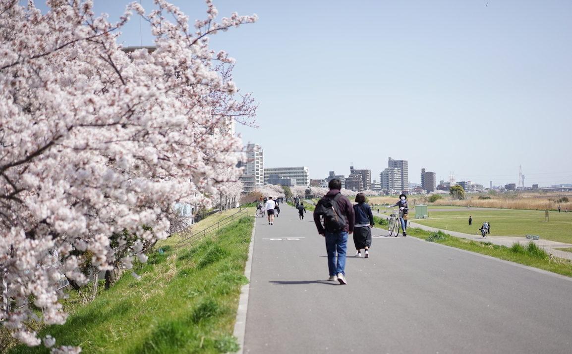 六郷土手 桜並木