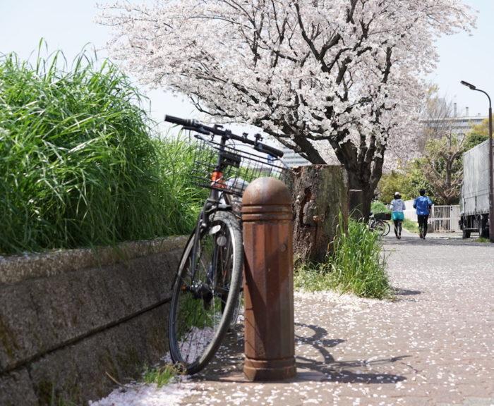 桜 ランナー 六郷土手