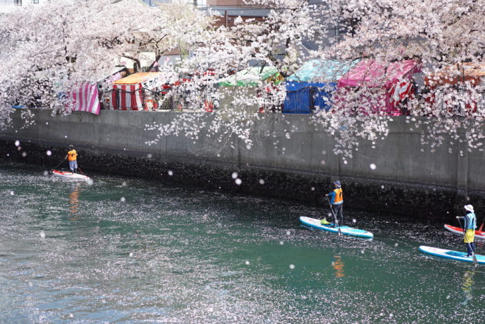 SUP 大岡川 桜