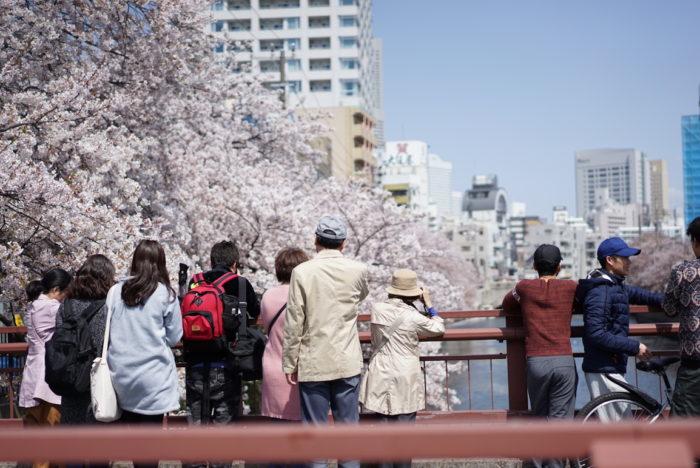 大岡川 桜を眺める人々