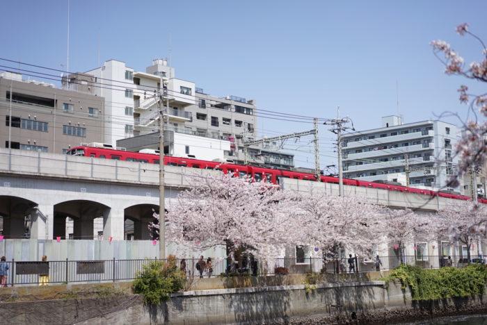 大岡川 桜 電車