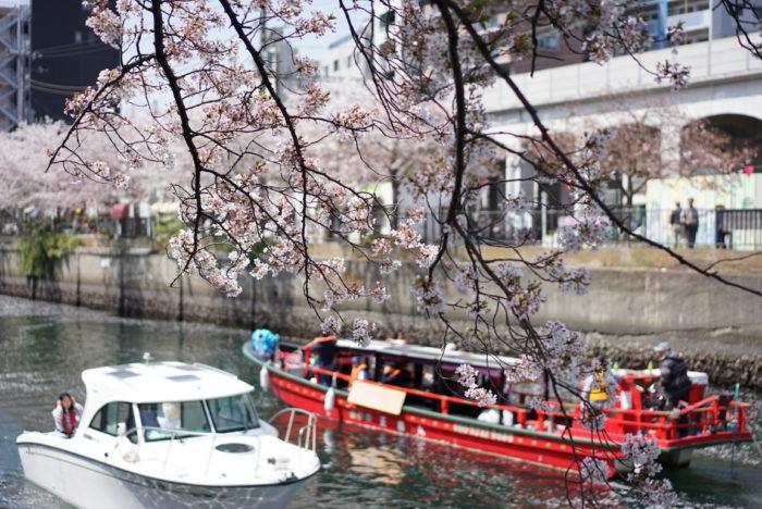 大岡川 桜 船 すれ違い