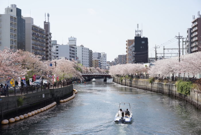 大岡川 桜