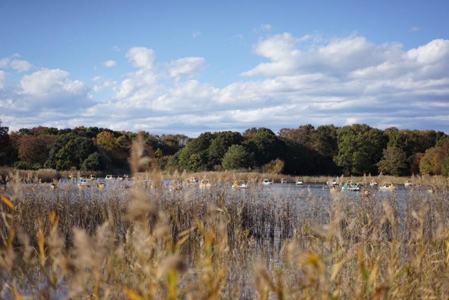 水鳥の池 昭和記念公園