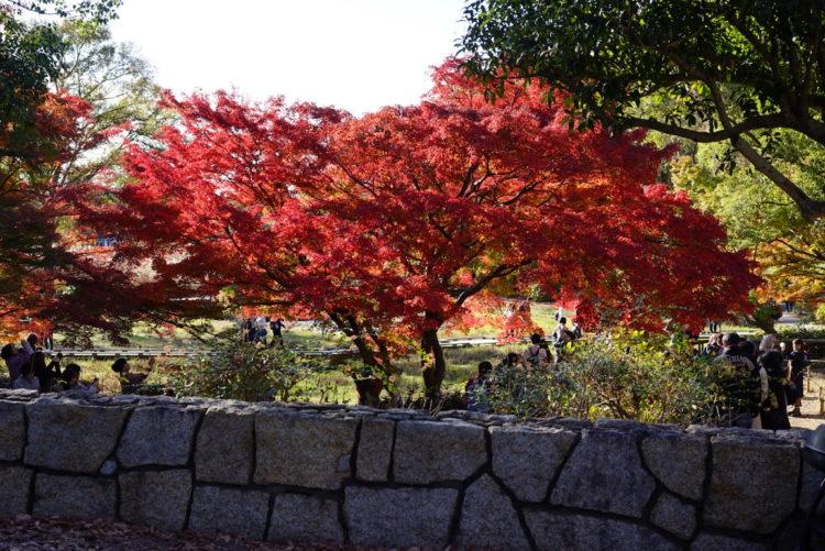 もみじ 昭和記念公園