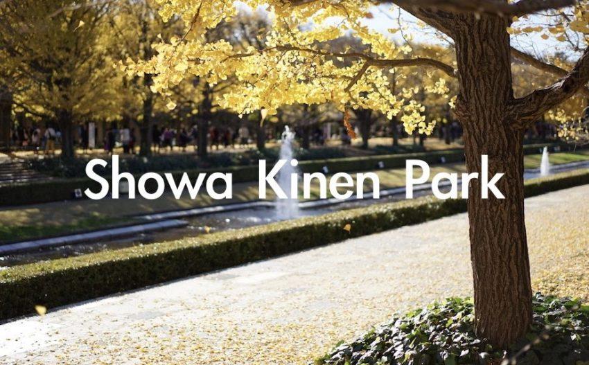 昭和記念公園 イチョウ 紅葉