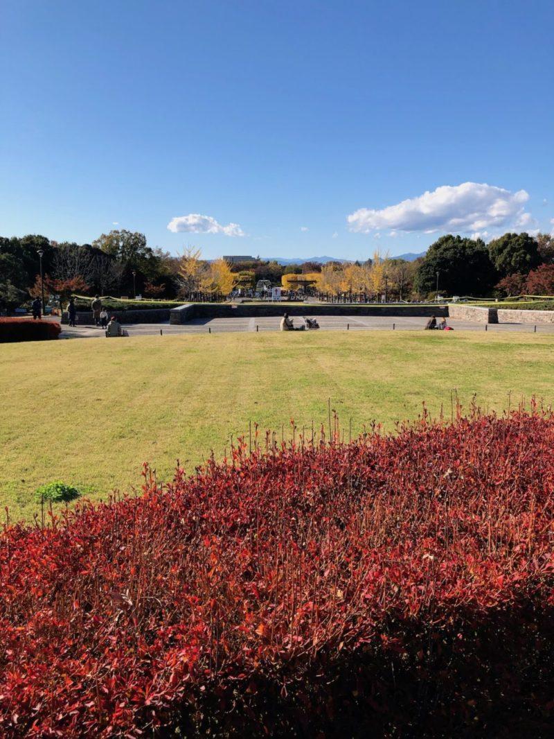 昭和記念公園 景色