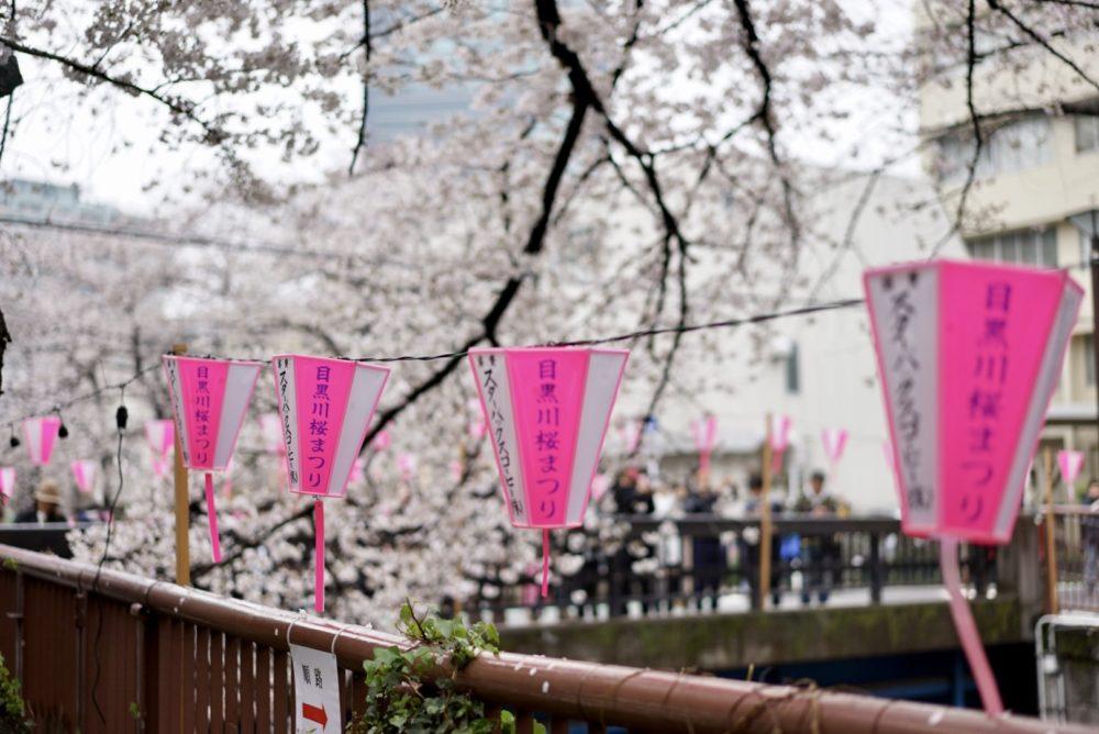 目黒川桜まつり スターバックス