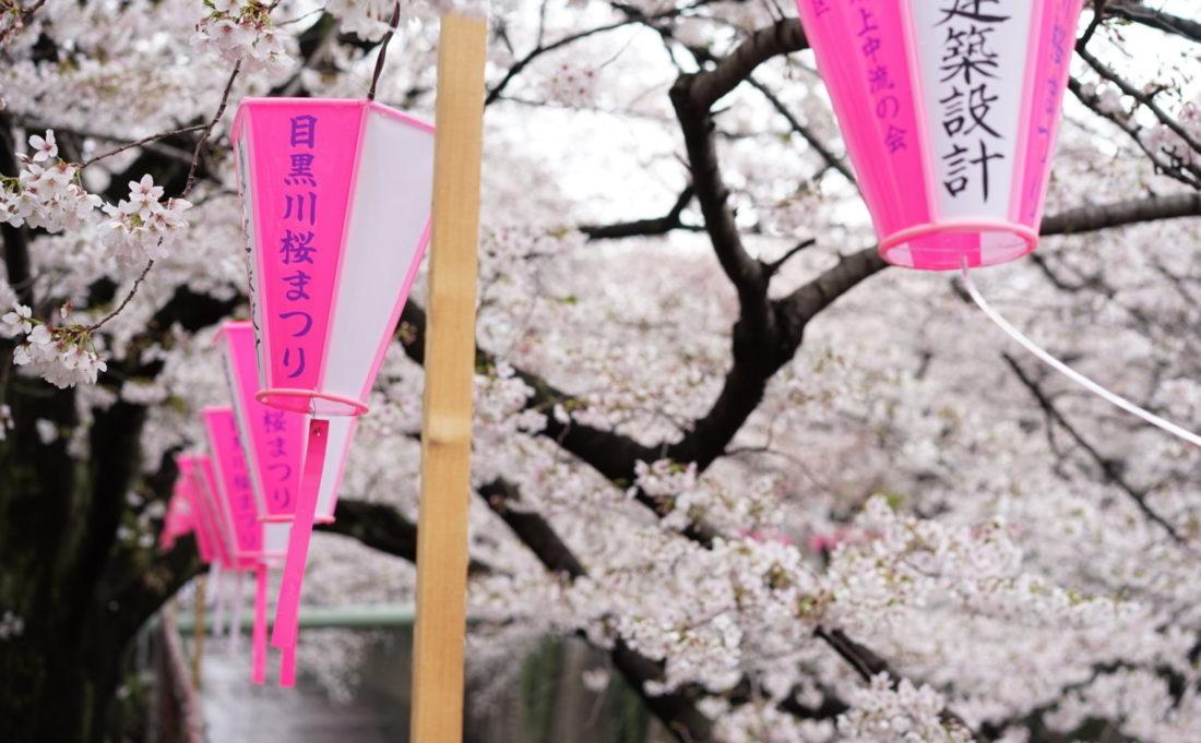 目黒川桜まつり アイキャッチ画像