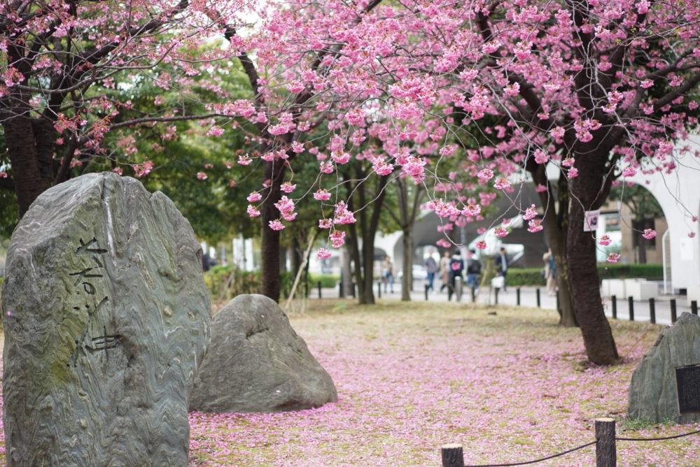 横浜緋桜 みなとみらい 石