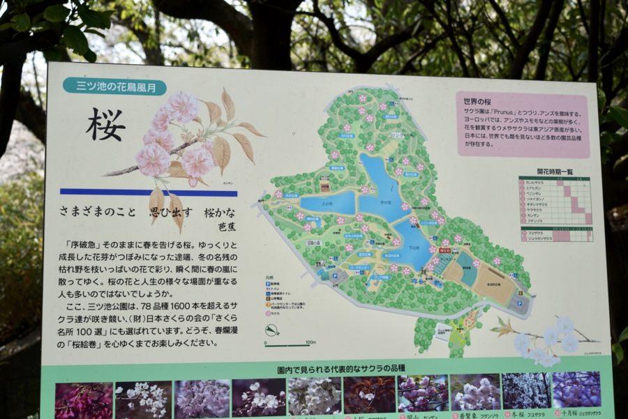三ツ池公園内の桜地図