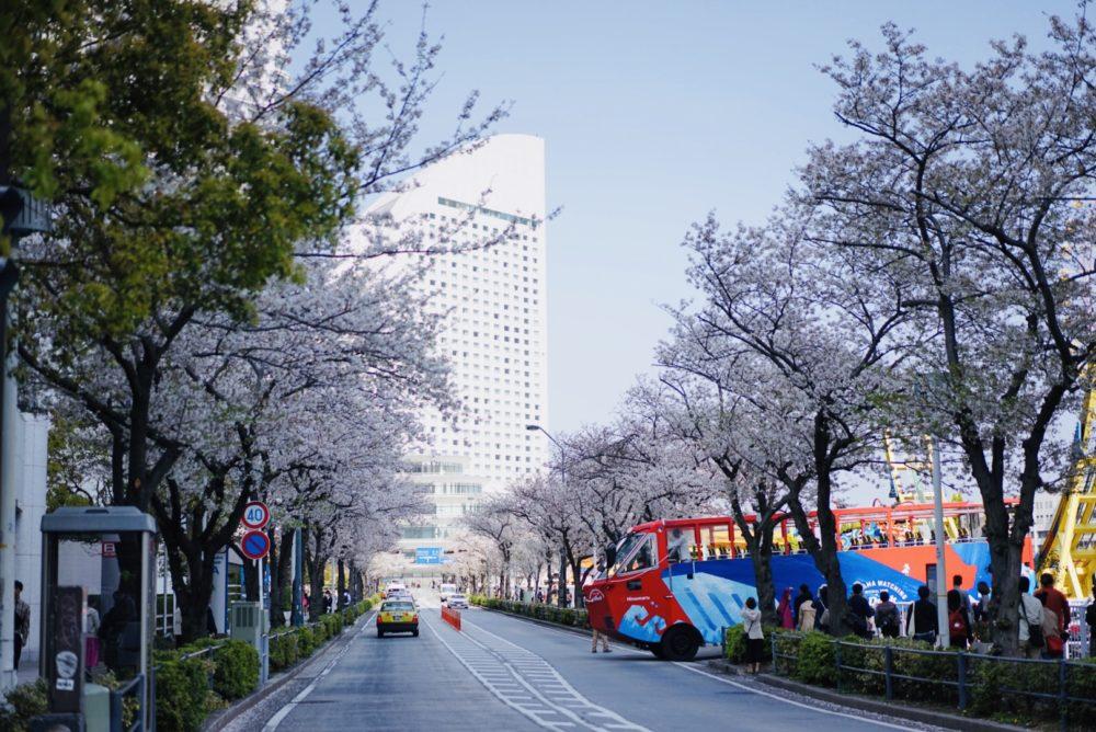 みなとみらい桜通り パシフィコ方面