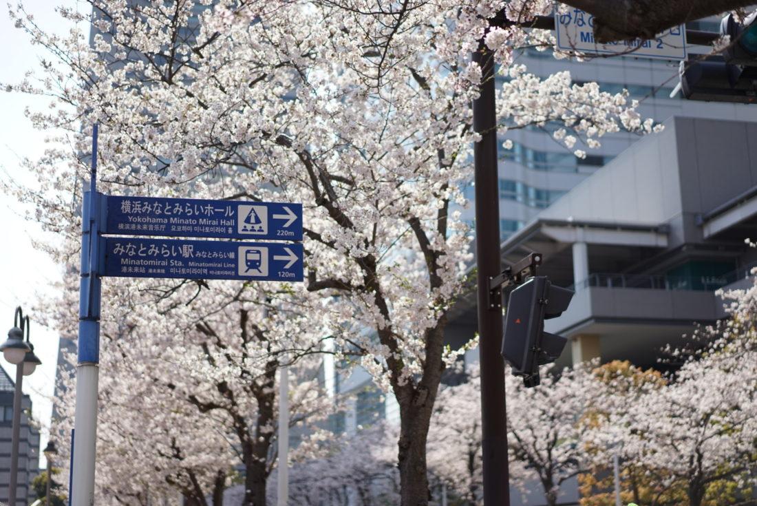 みなとみらい駅の看板と桜