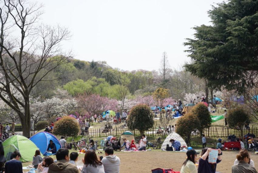 三ツ池公園 芝生エリア