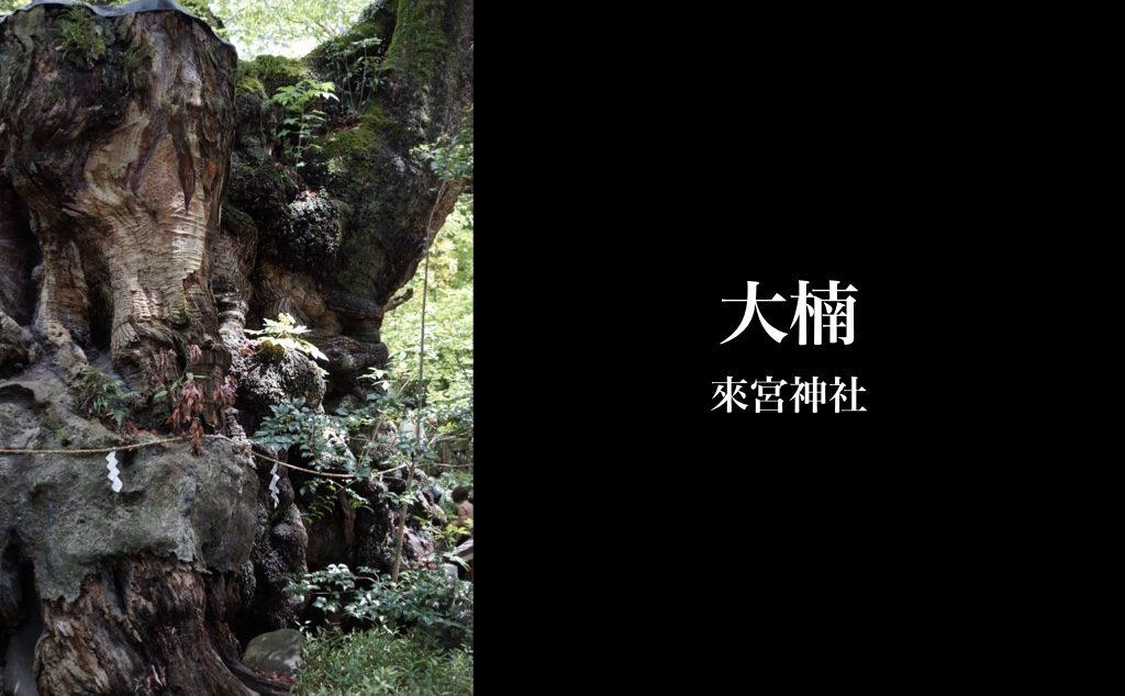 大楠 来宮神社