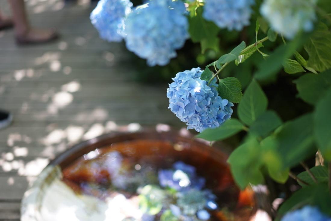 水と光と紫陽花 鎌倉の明月院