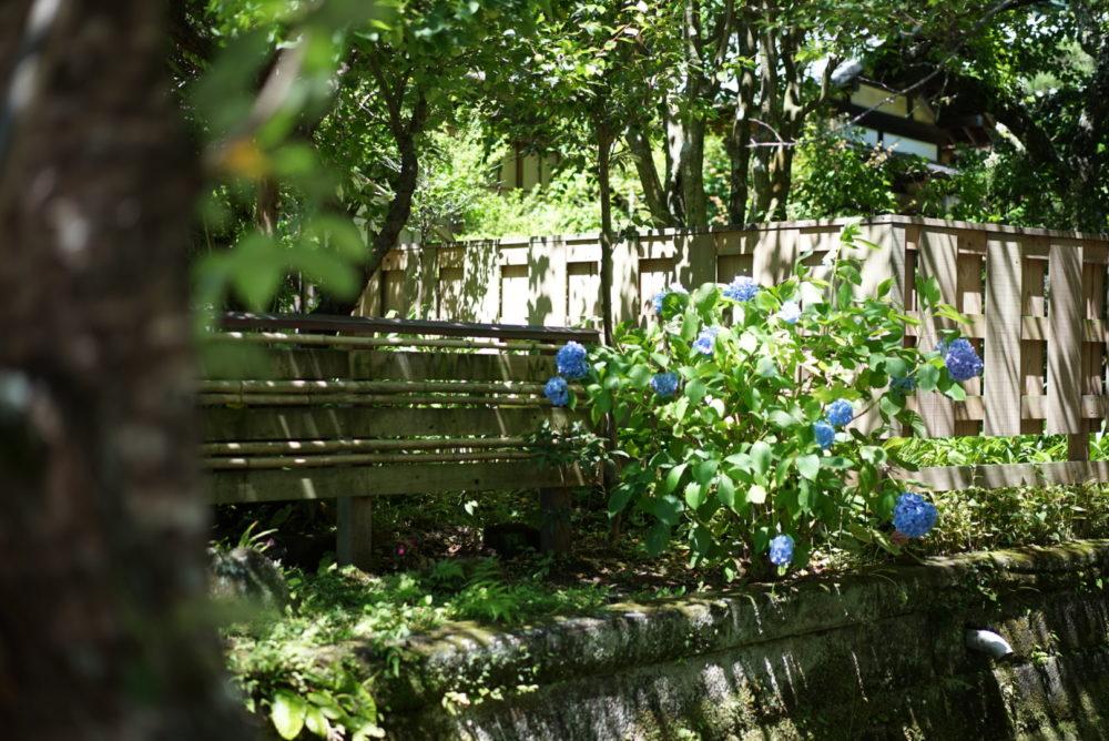 明月院への道 紫陽花
