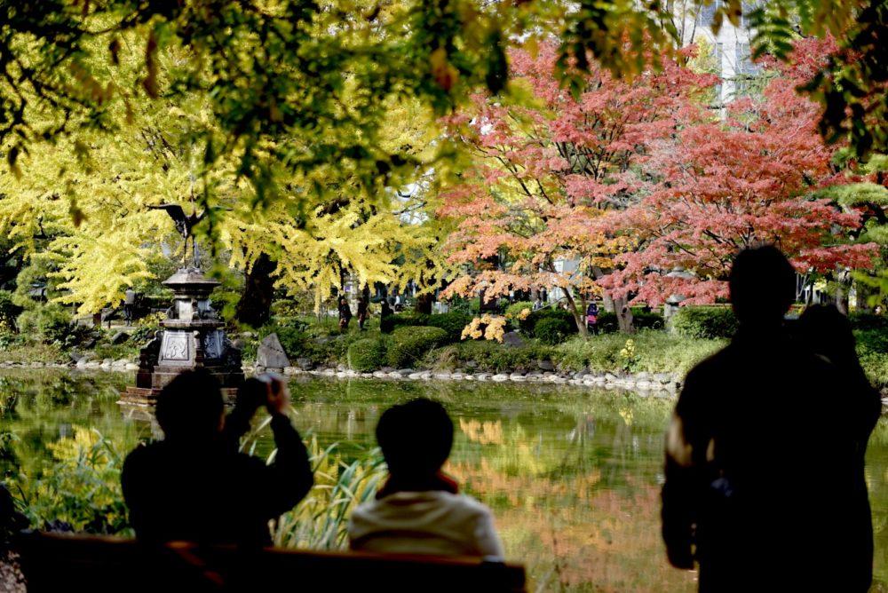 紅葉を鑑賞する人々 日比谷公園