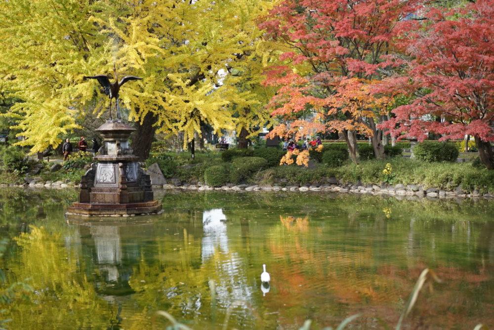 紅葉 池 日比谷公園 鳥