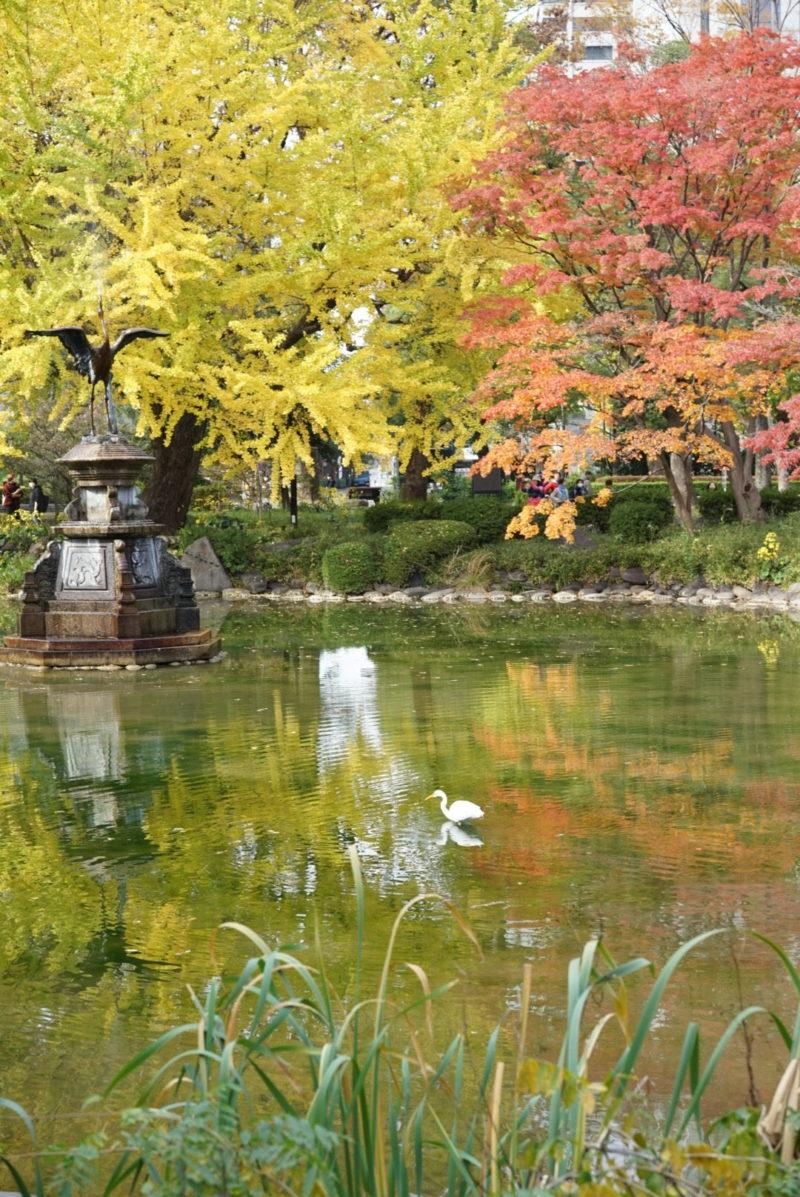 鳥と池と紅葉 日比谷公園