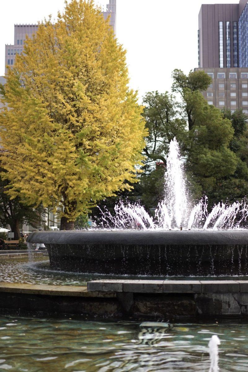 噴水とイチョウ 日比谷公園
