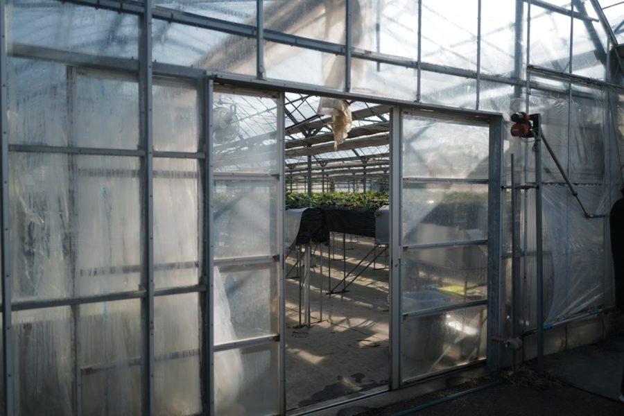 温室ハウス 二宮いちご園