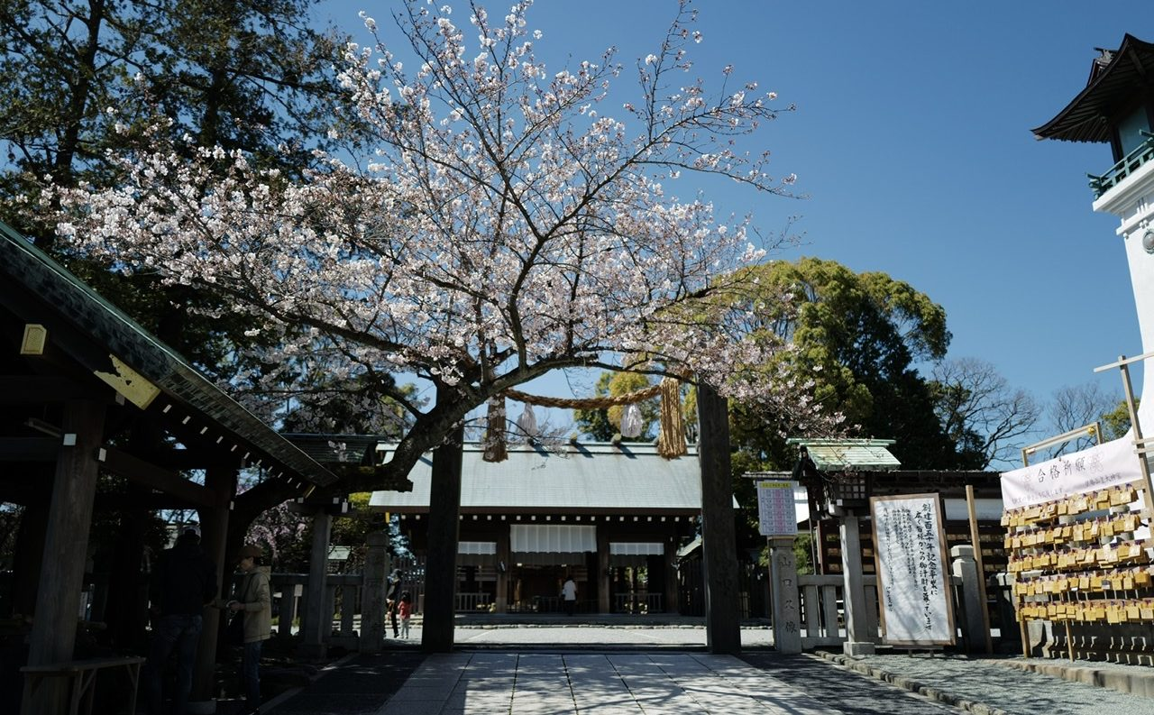 伊勢山皇大神宮 桜 名所
