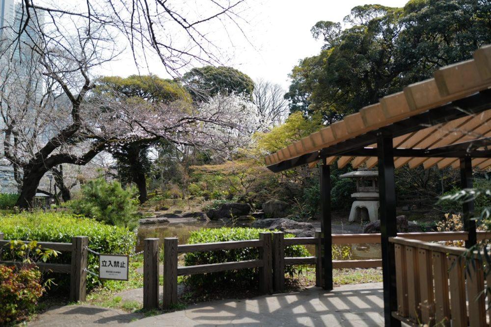 掃部山公園 桜 池