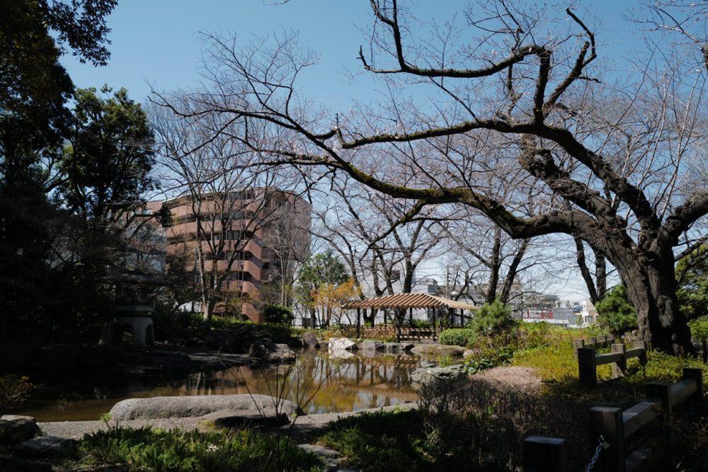 掃部山公園 池 木