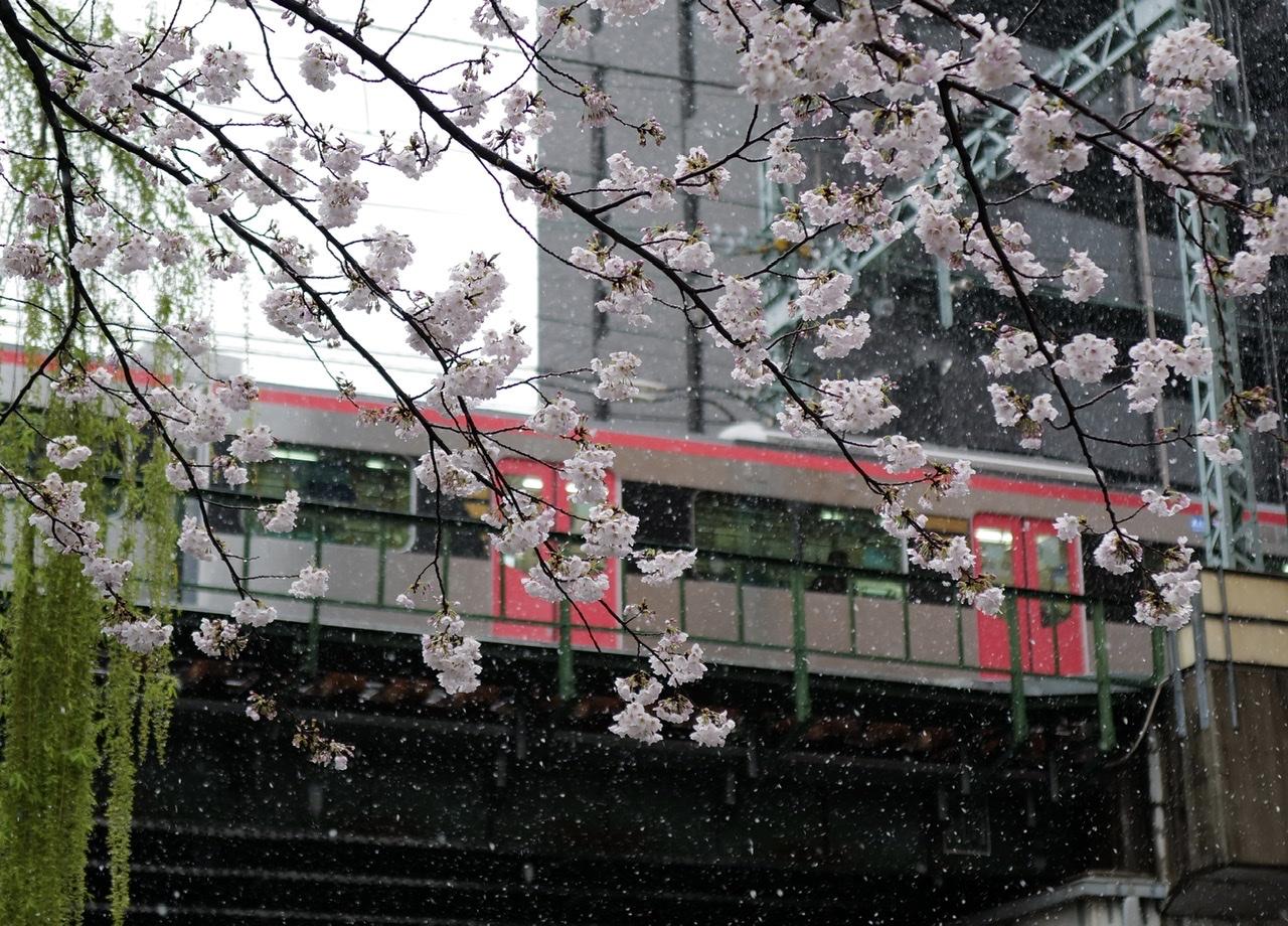 桜と雪と電車と Leica Q2