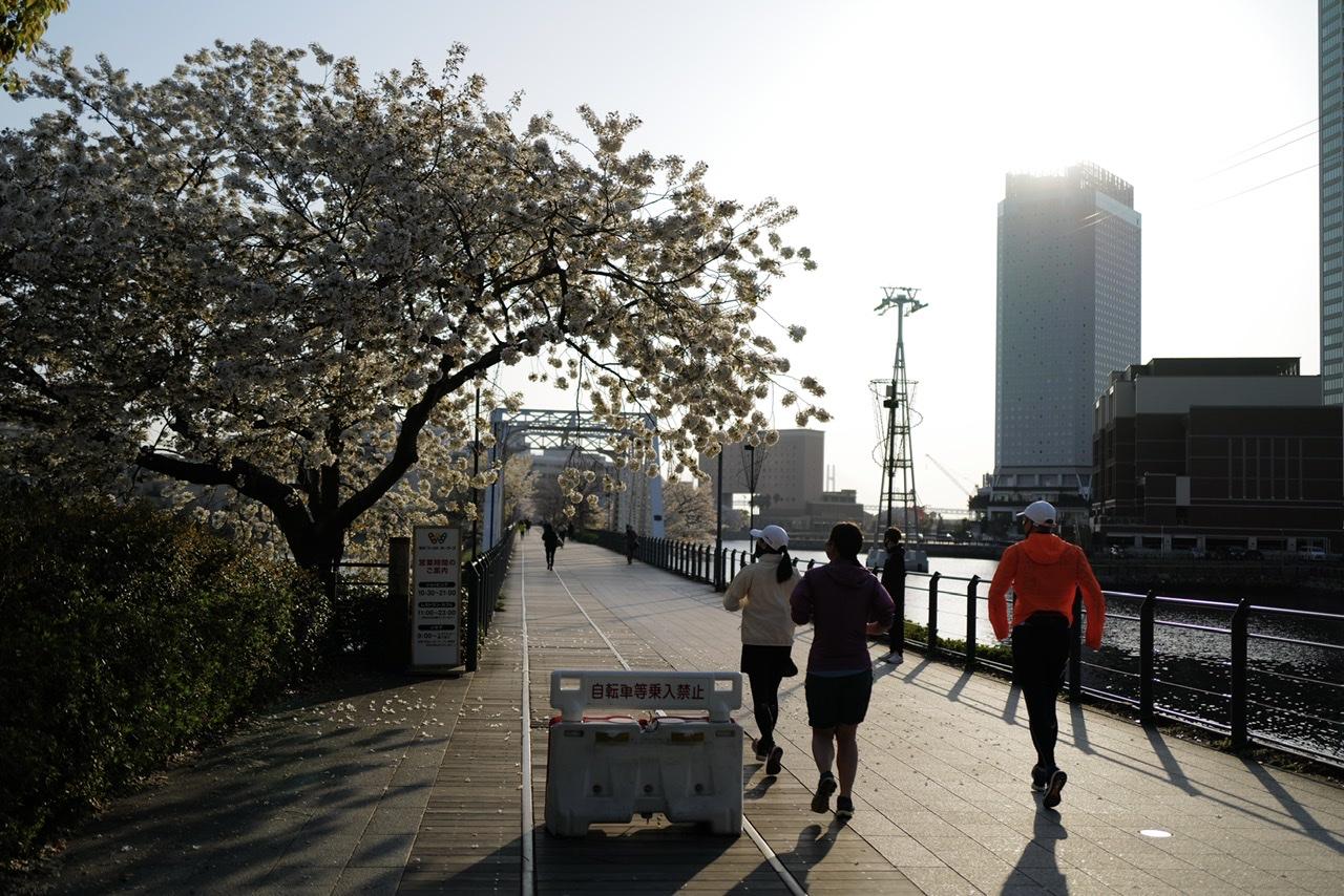 みなとみらい 桜 2021/3/27